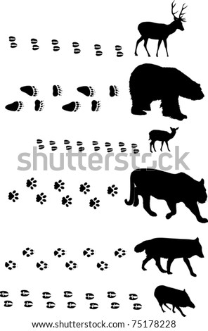 illustration with different animals and tracks collection - stock vector