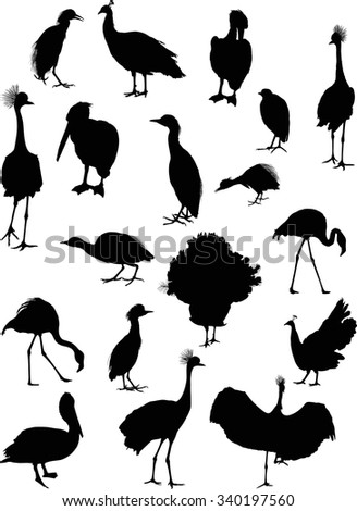 illustration with different bird silhouettes isolated on white background