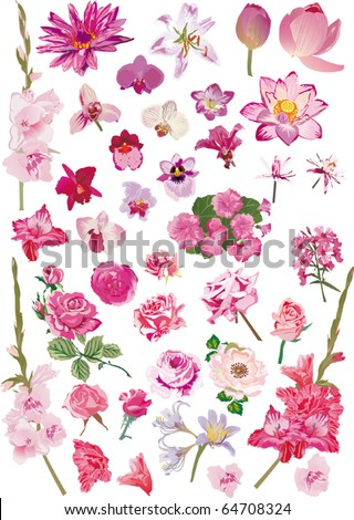 illustration with different flower collection isolated on white background - stock vector
