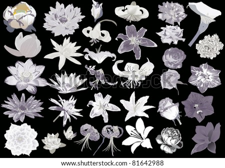 illustration with different flowers collection isolated on black background - stock vector