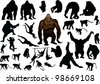 illustration with different monkeys isolated on white background - stock vector