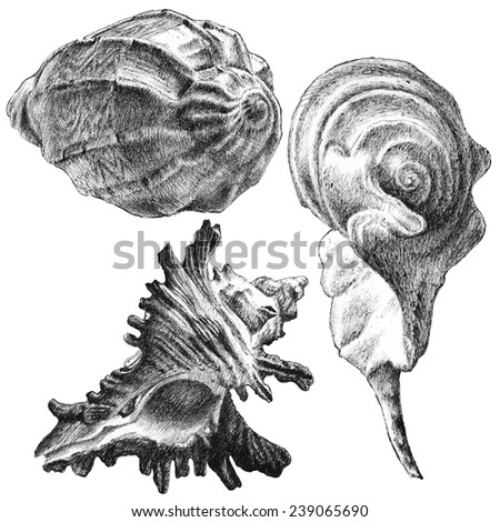 illustration with different realistic seashells on white background - stock vector