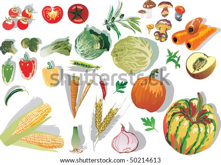 illustration with different vegetables collection isolated on white background - stock vector