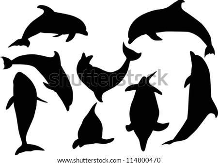 illustration with dolphins collection isolated on white background - stock vector