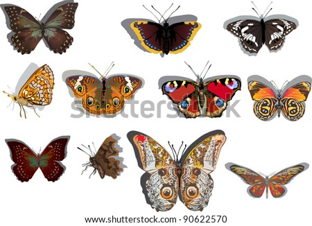 illustration with eleven orange and brown butterflies isolated on white background - stock vector