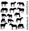 illustration with fifteen horses isolated on white background - stock vector