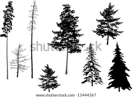 451268113 also Mountain Lake Scene 450295 furthermore Sooke Si a Spruce likewise Illustration Fir Set Isolated On White 15444367 additionally Christmas Star Smiley Contours Gg59297779. on fir tree silhouette clip art