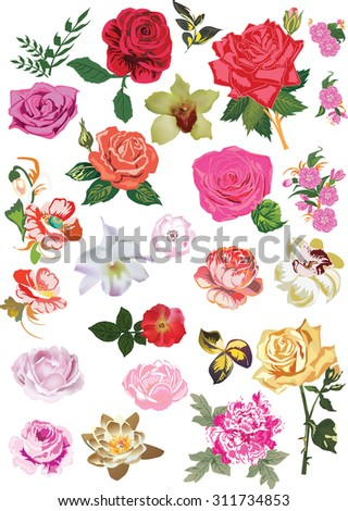 illustration with flower collection isolated on transparent background
