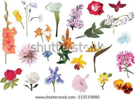 illustration with flowers collection isolated on white background - stock vector