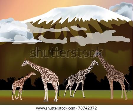 illustration with giraffes near mountain - stock vector