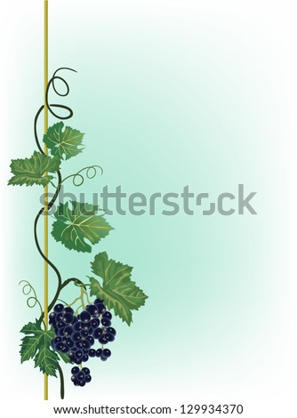 Illustration with grapes and leaves on light background - stock vector