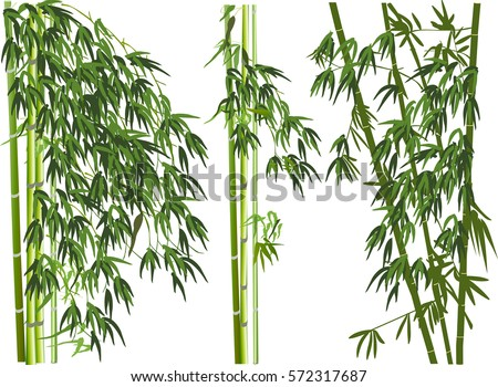 illustration with green bamboo plants on white background