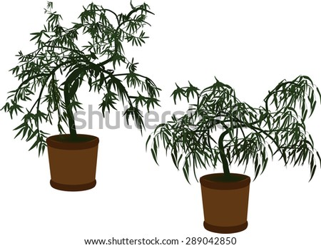 illustration with green bamboo silhouettes in pots isolated on white background