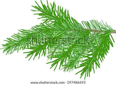 illustration with green fir branch isolated on white background