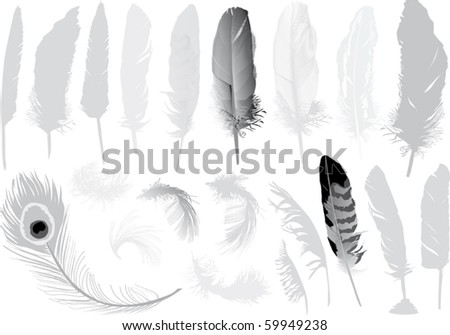 illustration with grey feathers isolated on white background - stock vector