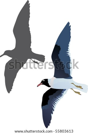 illustration with gull and shadow isolated on white background - stock vector