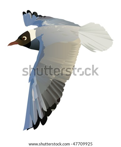 illustration with gull isolated on white background - stock vector