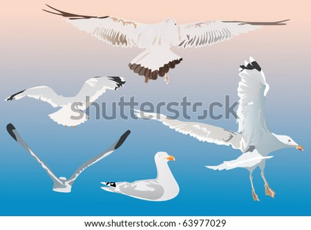 illustration with gulls on blue background - stock vector