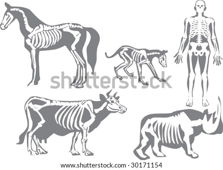 illustration with human and animals skeletons isolated on white background