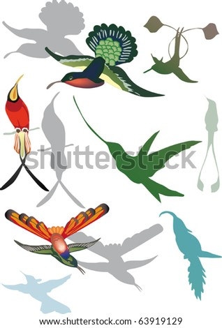 illustration with hummingbirds collection on white background - stock vector