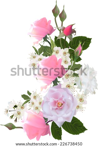 illustration with light roses isolated on white background