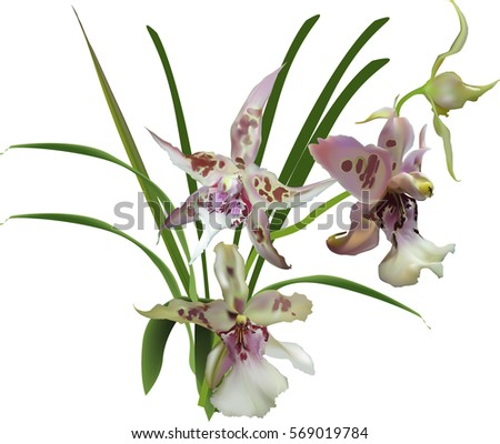 illustration with lilac and white orchids branch isolated on white background