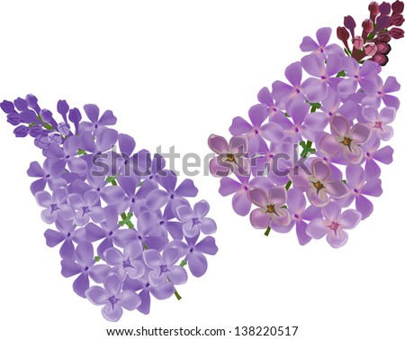 illustration with lilac flower branches on white background