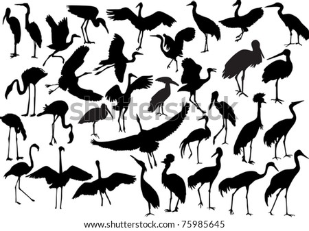 illustration with long legs birds collection isolated on white background - stock vector