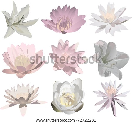 illustration with nine lily flowers isolated on white background - stock vector