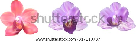 illustration with orchids blooms collection isolated on white background