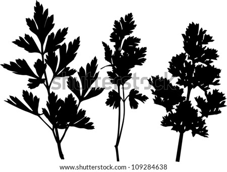 illustration with parsley silhouettes isolated on white background - stock vector