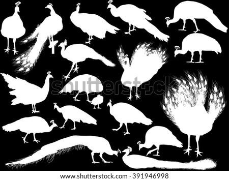 illustration with peacocks silhouettes isolated on black background