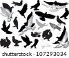 illustration with pigeon collection isolated on white background - stock vector