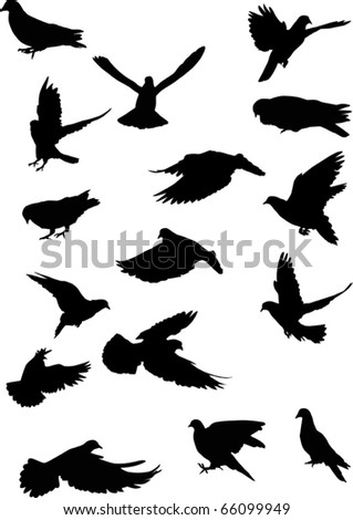 illustration with pigeon silhouettes isolated on white background - stock vector