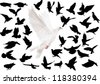 illustration with pigeons isolated on white background - stock vector