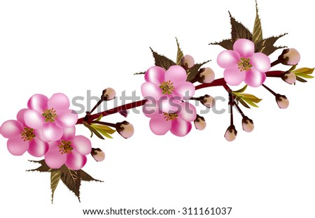 illustration with pink blossoming branch isolated on white background