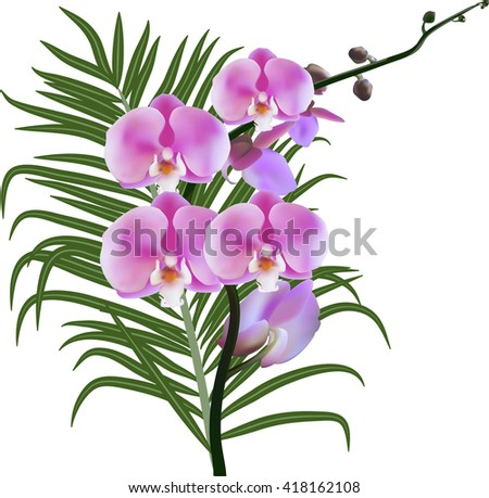 illustration with pink orchids and green leaf isolated on white background