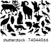 illustration with polar animals collection isolated on white background - stock vector
