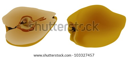 illustration with quince isolated on white background
