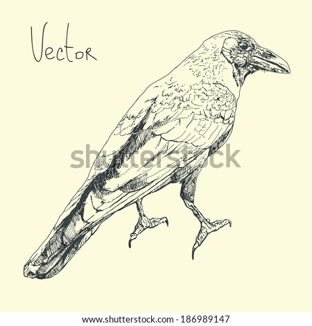 Illustration with raven in vector.