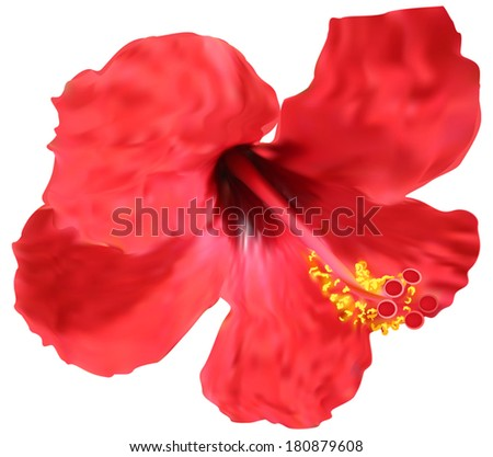 illustration with red hibiscus bloom isolated on white background