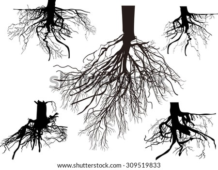 illustration with set of black roots isolated on white background