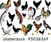 illustration with set of chickens isolated on white background - stock vector