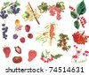 illustration with set of different berries isolated on white background - stock photo