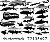 illustration with set of fishes on white background - stock vector