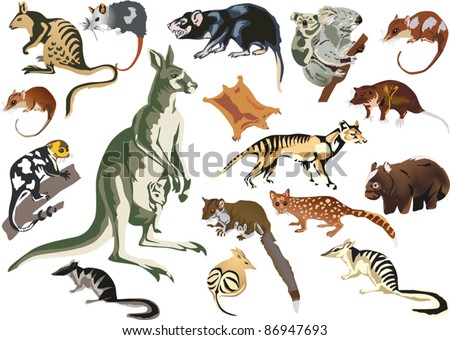 illustration with set of marsupial animals isolated on white background - stock vector