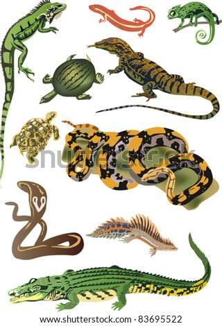 illustration with set of reptiles and amphibians isolated on white background - stock vector