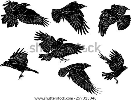 illustration with set of seven crow silhouettes isolated on white background - stock vector