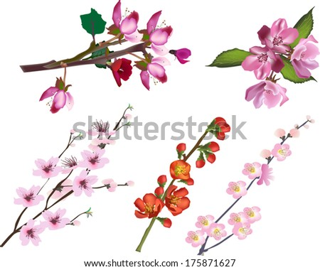illustration with set of spring tree blossoming branches isolated on white background