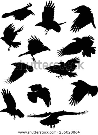 illustration with set of twelve crow silhouettes isolated on white background